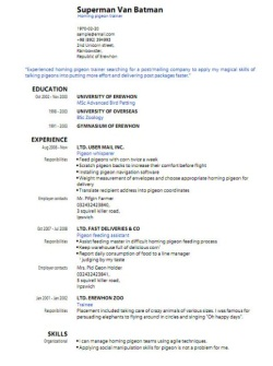 CV Format 1  Professional Looking Resume